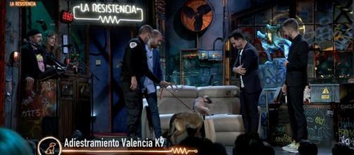 El perro antidroga estuvo inspeccionando al público de 'La Resistencia' (Twitter: @LaResistencia)