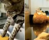 Le chat qui nettoie la maison de son propriétaire a fait le buzz - Source : montage Twitter @nocatplaces
