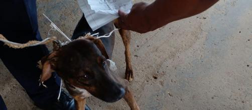 Los presos se comunicaban entre pabellones a través de un perro (Twitter: @PenitenciarioPA)