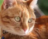 Le chat transportait la drogue dans des sachets en plastique accrochés à son collier - Source : image d'illustration, Pixabay
