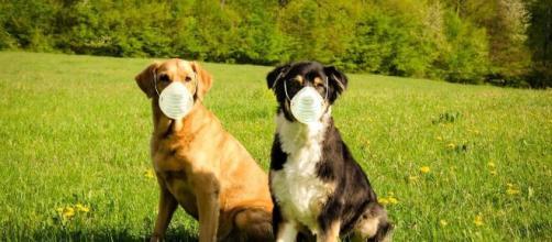Les chiens détecteraient la Covid-19 mieux que les tests PCR - Source : image d'illustration - Pixabay