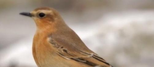 Dimming lights could save many birds when they fly through the city at night (Image source: The Top Ten/YouTube)
