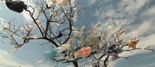 Why we need to stop plastic pollution in our Oceans for good (Image source: Oceana/YouTube)