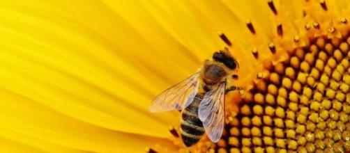 Quel est l'avenir d'un écosystème sans abeilles - Source : image d'illustration