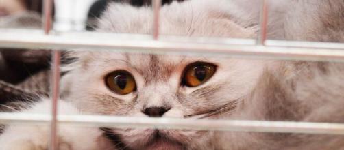 Un chat dans un refuge - Source : image d'illustration, Pixabay