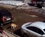 Les 7 chiens ont décidé d'encercler le chat qui s'est défendu tout seul - Source : Capture d'écran Youtube