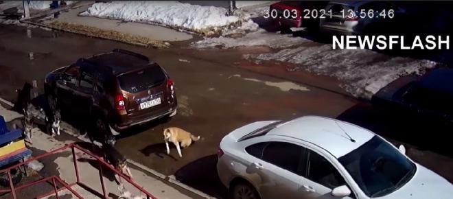 Russie : Une bagarre entre un chat contre sept chiens fait le buzz sur Internet (Vidéo)