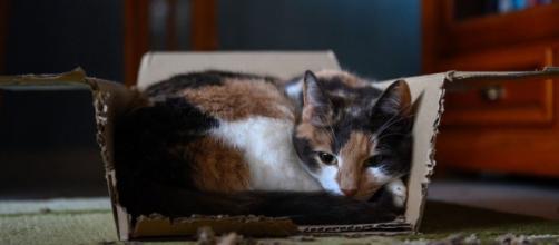 Les chats adorent se cacher dans des boîtes en carton - Source : image d'illustration - Pixabay