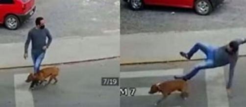 Un chien renverse un homme avec une violence folle (Credit : capture d'écran Youtube)
