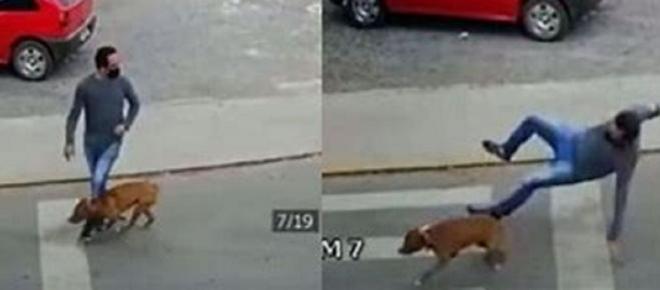 Vidéo : un chien renverse un homme avec violence et le laisse K.O.
