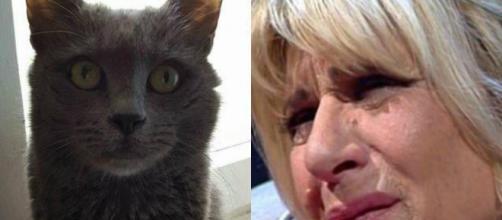Gemma Galgani, deceduto il gatto.