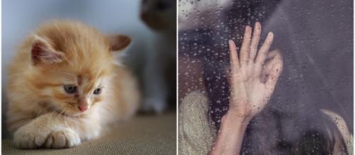 Votre chat n'est que le reflet de votre humeur du jour selon cette étude britannique - Source : Montage, Pixabay
