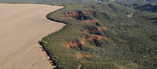 Além da falta de chuvas, avanço do desmatamento no Cerrado pode ser a causa de crise hidrelétrica no Brasil (Adriano Gambarini/WWF-Brasil)
