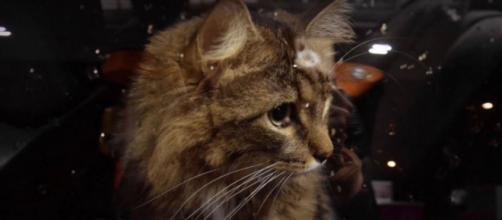 Le chat aurait passé plus de 24 heures enfermé dans une voiture sous une chaleur insoutenable - Source : image d'illustration
