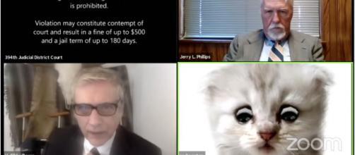 Un avocat américain a été contraint malgré lui de participer à un procès sous les traits d'un chaton - Source : capture d'écran @Vice