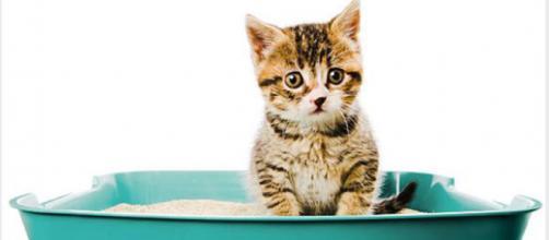 Votre chat a pour habitude de courir après l'étape de la défécation - Source : Istockphoto