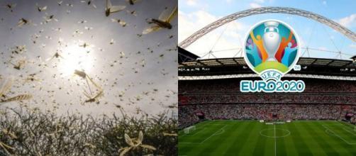 La finale de l'Euro menacée par une invasion de fourmis ? Source : montage YouTube insectes et wembley
