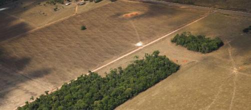 Amazônia: áreas desmatadas apresentaram uma emissão de CO2 dez vezes maior que outras regiões, diz pesquisa (Araquém Alcântara/WWF-Brasil)