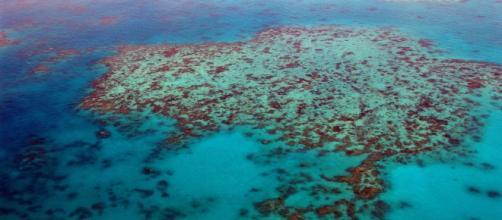 UNESCO flags risk to Australia's Great Barrier Reef (Image source: Flickr/steinchen)