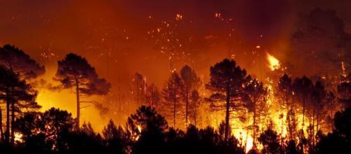 Sardegna, brucia l'oristanese: 400 evacuati a Cuglieri, tanti danni e paura.