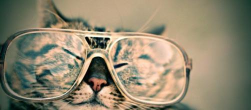 Les chats peuvent-ils être cleptomanes ? Source : image d'illustration, Pixabay