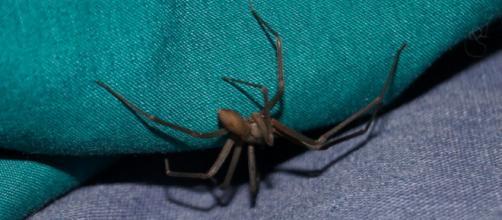La araña picó al chico mientras éste estaba de vacaciones en Ibiza (Pixabay)