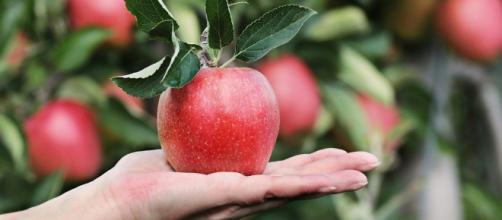 Alimentos que ajudam a emagrecer (Reprodução/Pixabay)