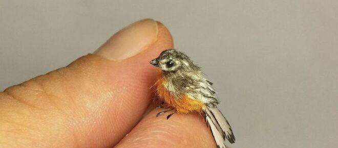Ce n'est pas vrai : des hôpitaux submergés avec surdoses d'ivermectine au plus petit oiseau du monde