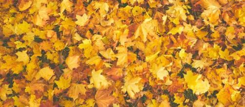 L'influenza dell'equinozio d'autunno sui segni zodiacali: tranquillità per Gemelli.