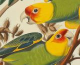 The paintings of John James Audubon depicted birds in their natural environment (Image source: Sotheby's/YouTube)
