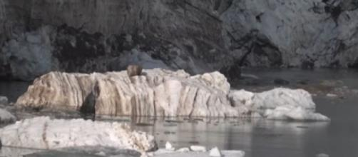 From the Arctic to the Alps, world's glaciers melting at a faster rate (Image source: FRANCE 24 English/YouTube)