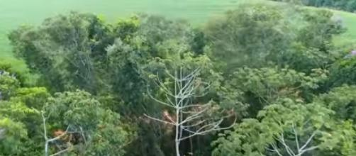 The plan is to create a massive forest cover between Liverpool and Hull [Image source: CBS Evening News/YouTube)