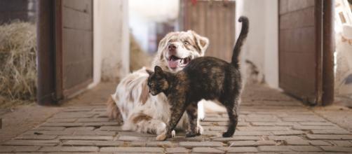 """Las mascotas eran consideradas como """"bienes muebles que se mueven"""". (Fuente: Pixabay.com)"""
