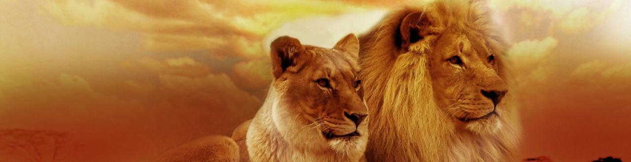 Animales: todo lo que hay que aprender sobre nuestros compañeros de planeta