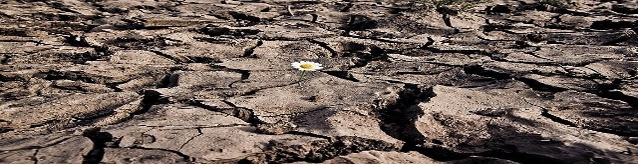 La ecología lucha por la supervivencia del medio ambiente y los seres vivos