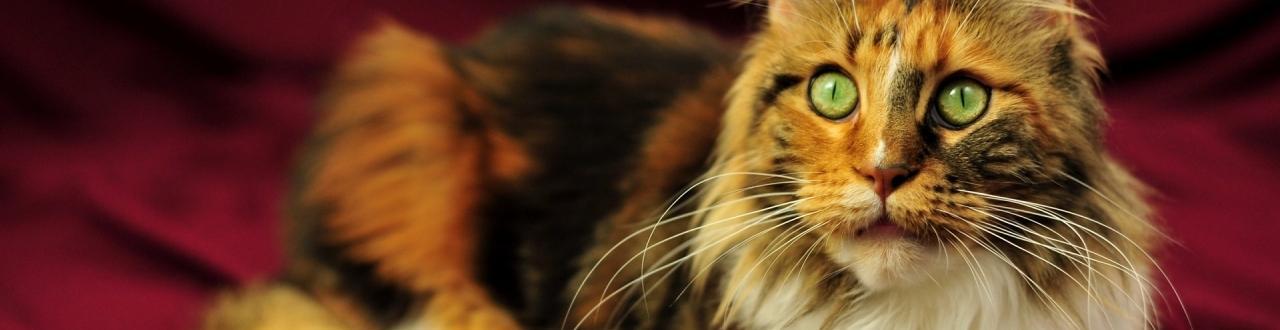 Fique por dentro de tudo que se passa no mundo dos gatos, com dicas e informações sobre cuidados, bem-estar animal e psicologia felina