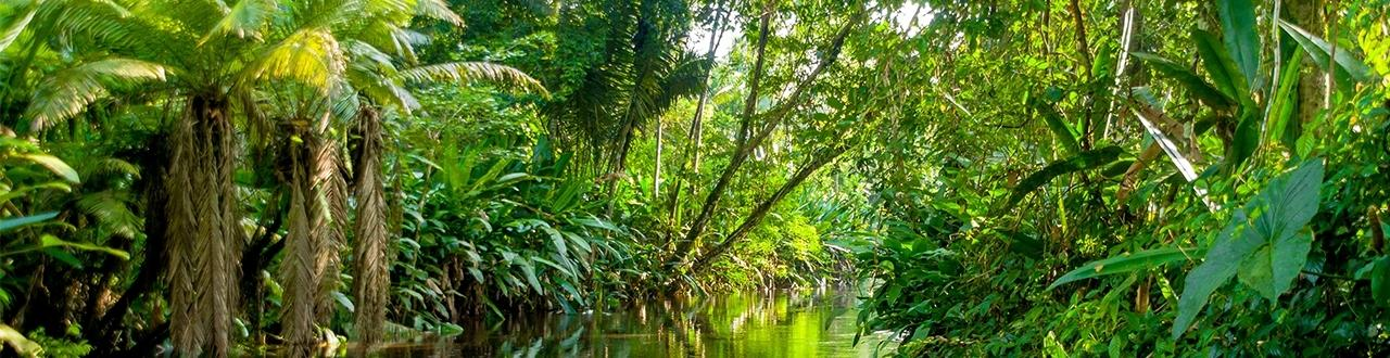 Inscreva-se e fique por dentro de todos os assuntos envolvendo a região do Amazonas e nossa floresta Amazônica.