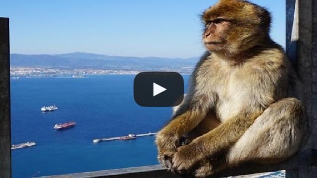 Video: 'Calm down!' Spain warns Britain over Gibraltar