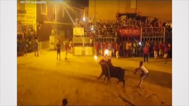 Com fogo no chifre, touro comete suicídio e vídeo é impactante