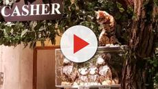 Cafés de gatos en Tokio, ¿buenos o malos?