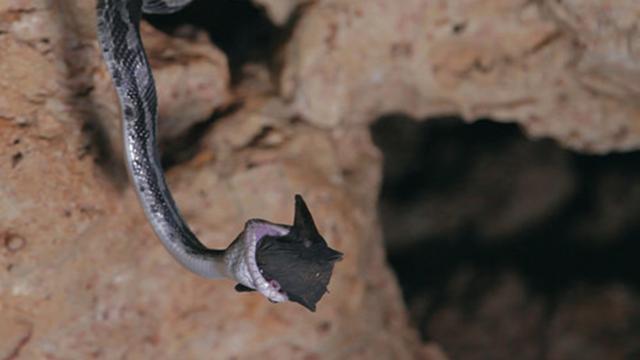 La cueva de las serpientes colgantes
