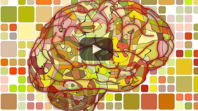 Neurociencia como respuesta a la razón humana de la existencia