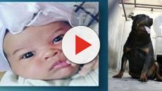 Bebê de 27 dias morre depois de ser atacada por cão da família