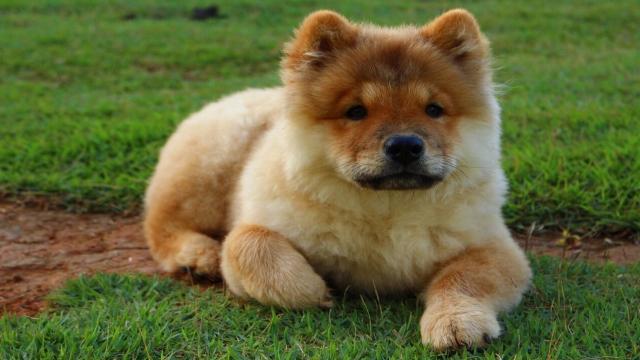 7 possíveis novas raças de cães que você não conhece