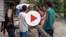 Homem luta com cobra gigantesca na Indonésia
