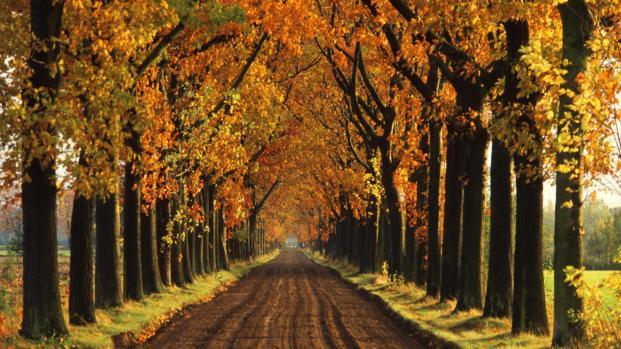 Las nuevas tendencias para la temporada de otoño