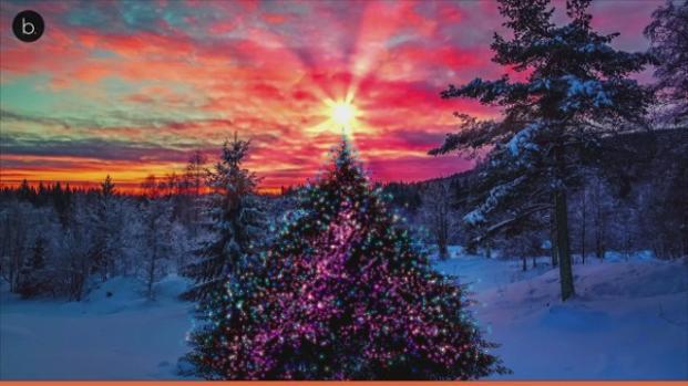 El arte de decorar el árbol de Navidad