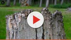 """Las colonias de hormigas actúan como """"superorganismos"""""""