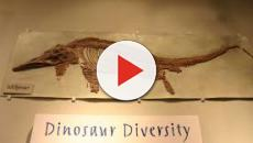 Ichthyosaur fossil discovery in India sheds light on their evolution & diversity