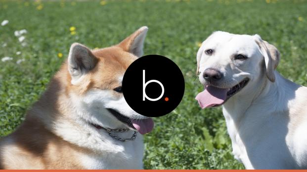 'Cães também são pessoas': Cientista afirma, ao estudar cérebro dos animais